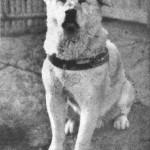 Der Loyalste Hund der Welt