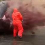 Size Zero der etwas anderen Art: Wal gibt dem Körperkult neue Bedeutung.